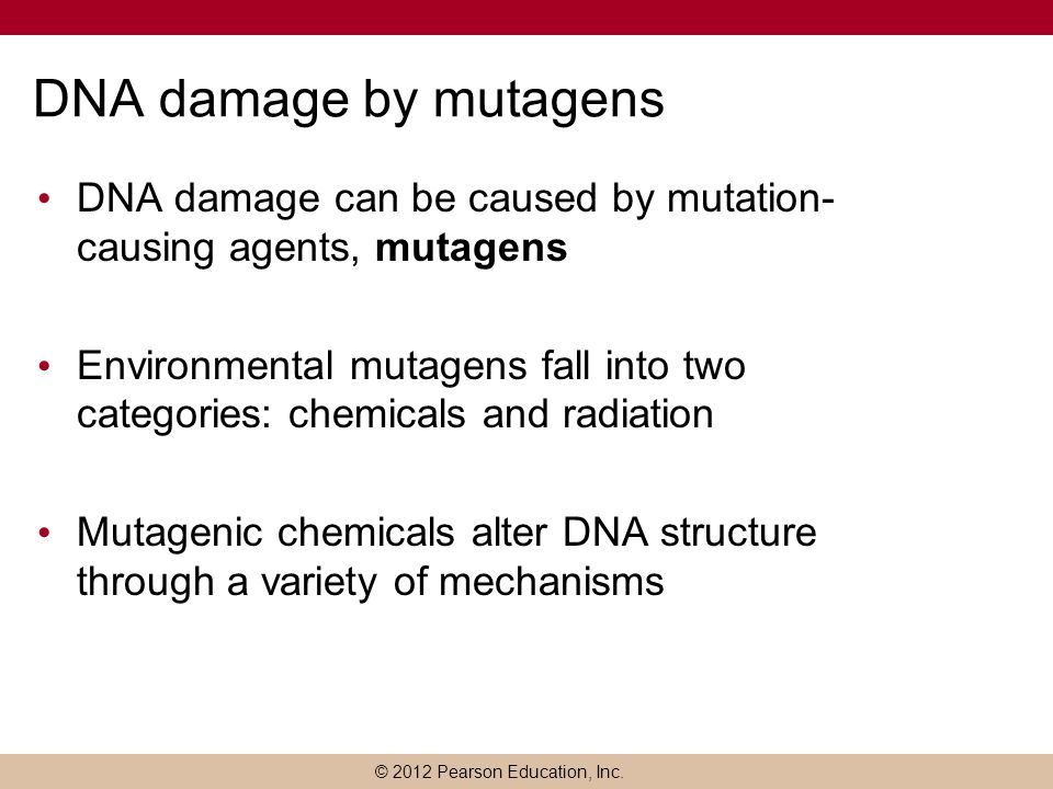 DNA damage by mutagens DNA damage can be caused by mutation-causing agents, mutagens.