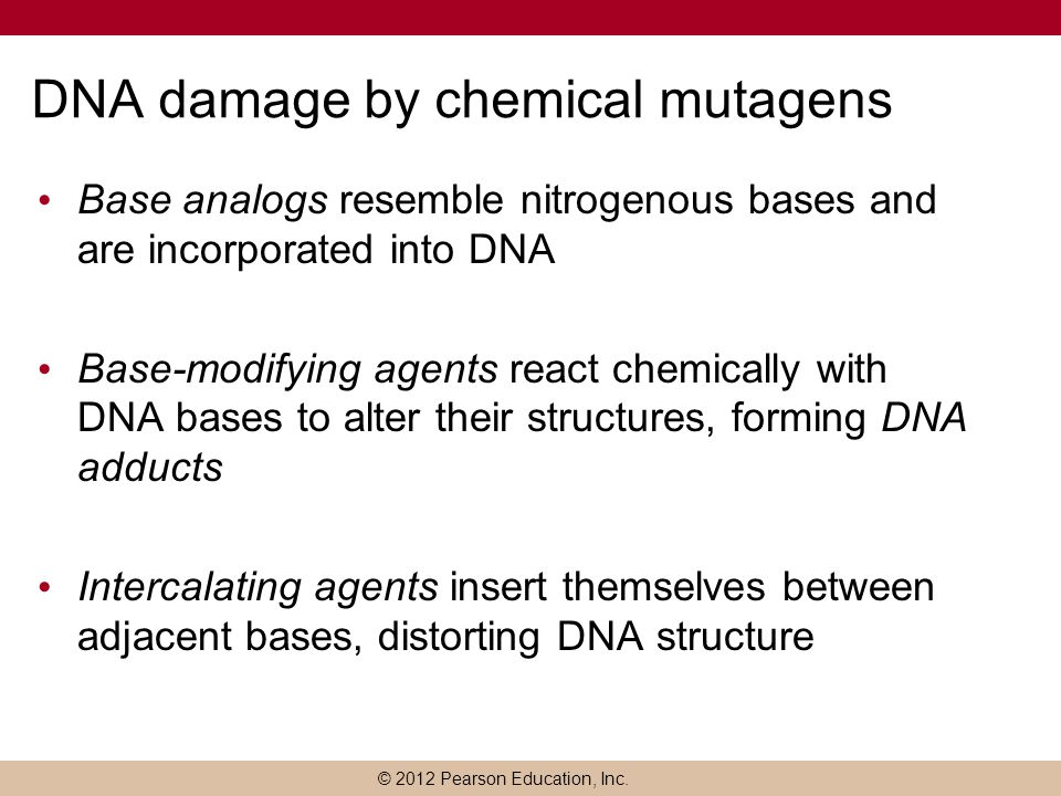 DNA damage by chemical mutagens