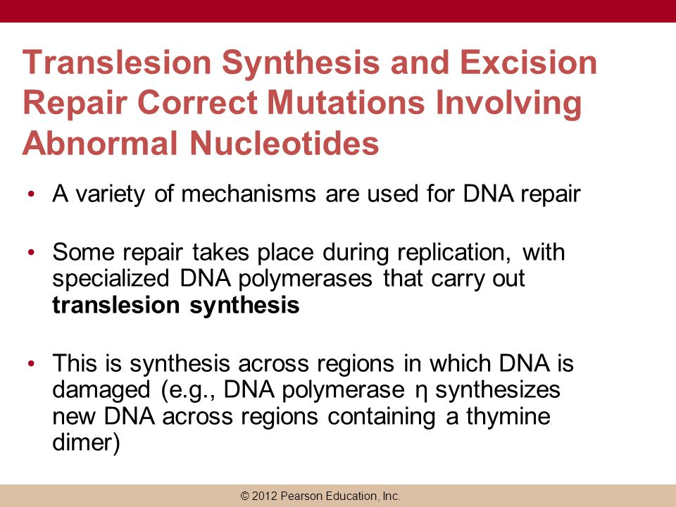 Translesion Synthesis and Excision Repair Correct Mutations Involving Abnormal Nucleotides