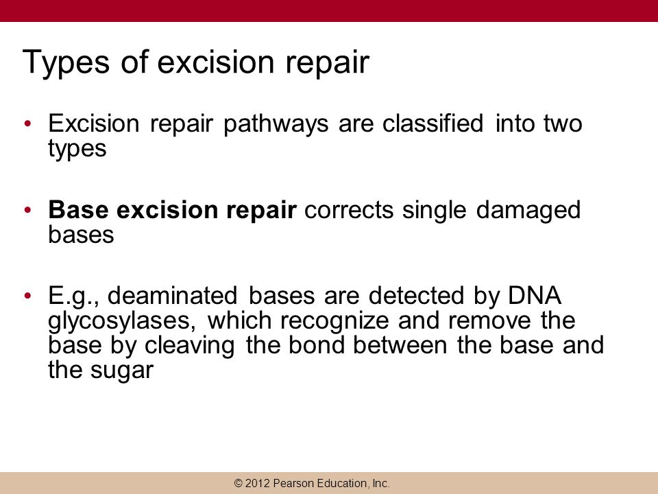 Types of excision repair