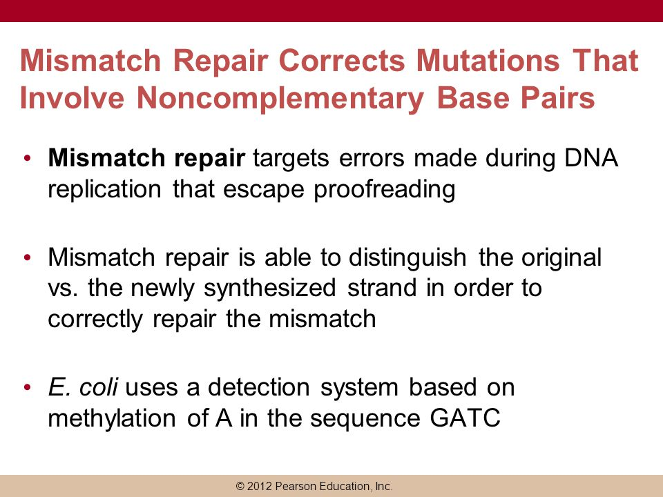 Mismatch Repair Corrects Mutations That Involve Noncomplementary Base Pairs