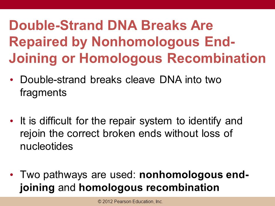 Double-Strand DNA Breaks Are Repaired by Nonhomologous End-Joining or Homologous Recombination