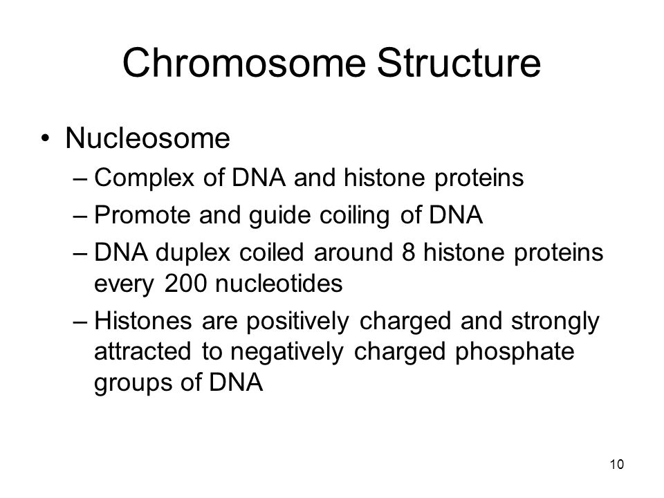 Chromosome Structure Nucleosome Complex of DNA and histone proteins