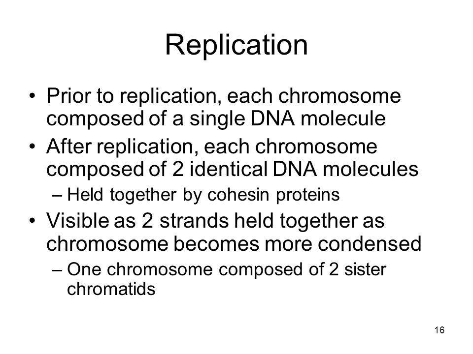 Replication Prior to replication, each chromosome composed of a single DNA molecule.