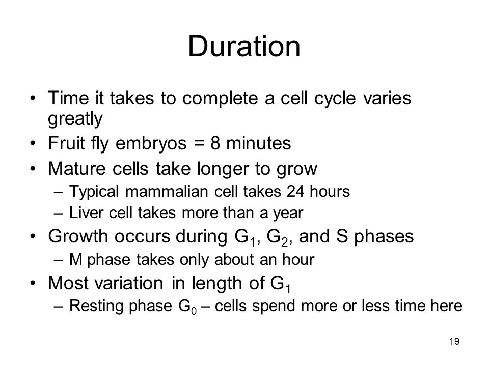 Duration Time it takes to complete a cell cycle varies greatly