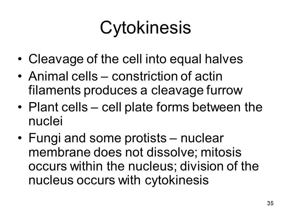 Cytokinesis Cleavage of the cell into equal halves