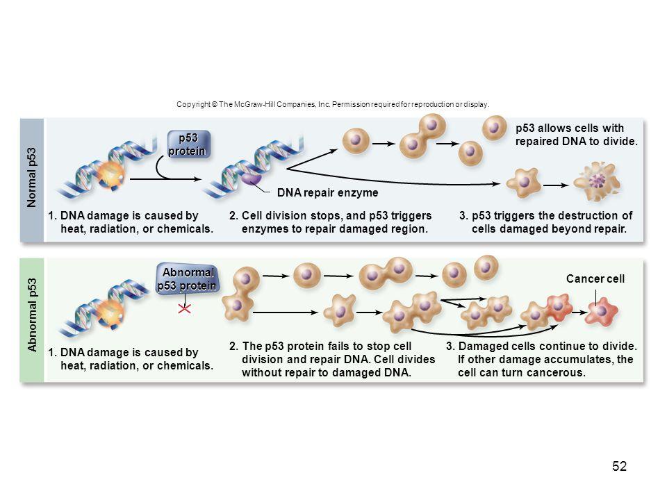 p53 protein Abnormal p53 protein