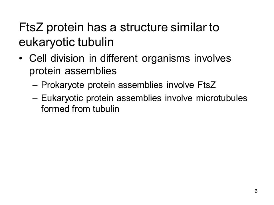 FtsZ protein has a structure similar to eukaryotic tubulin