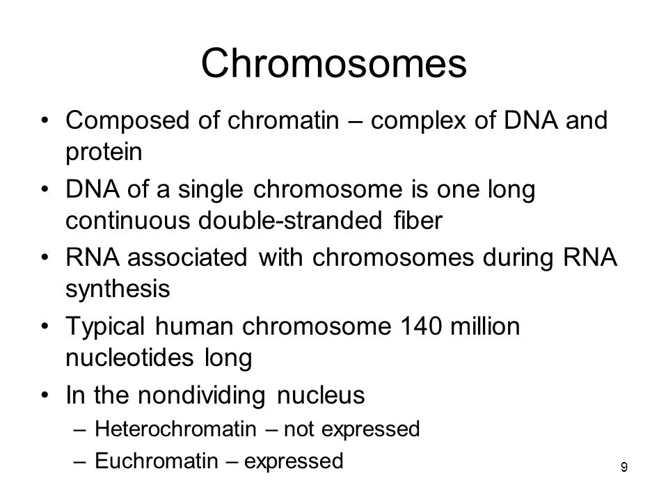 Chromosomes Composed of chromatin – complex of DNA and protein