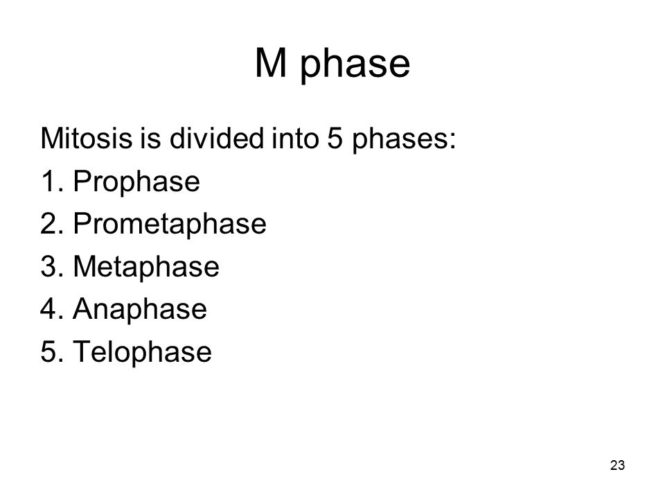 M phase Mitosis is divided into 5 phases: 1. Prophase 2. Prometaphase