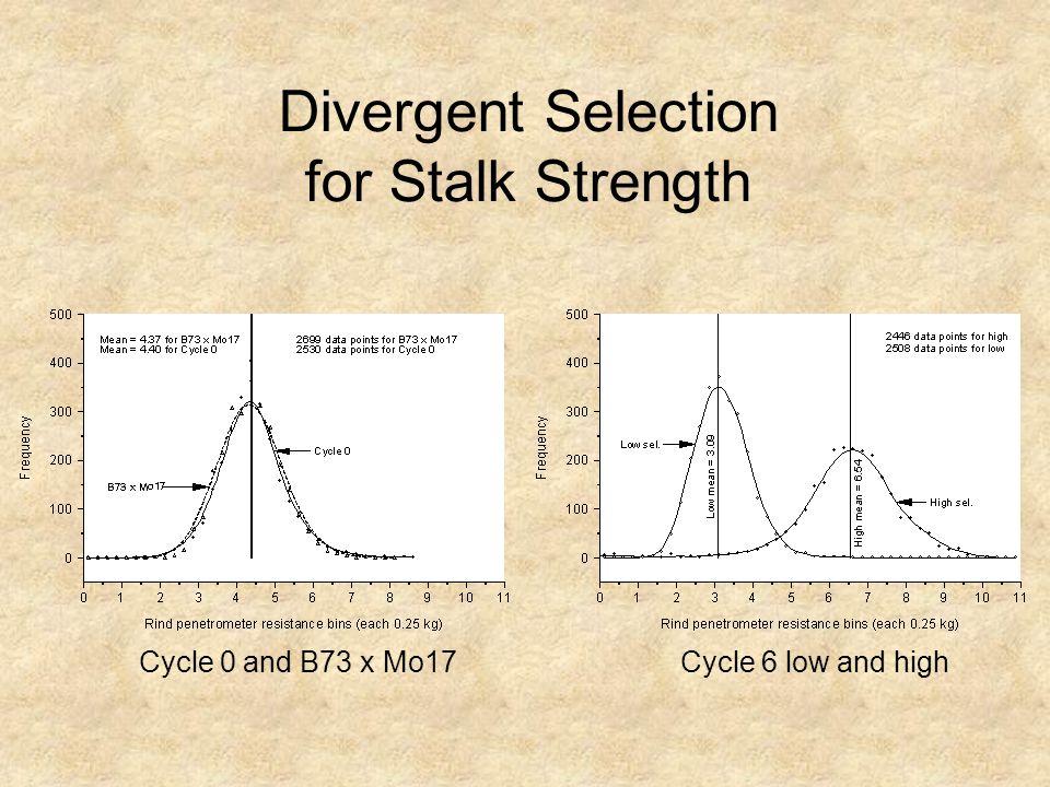 Divergent Selection for Stalk Strength