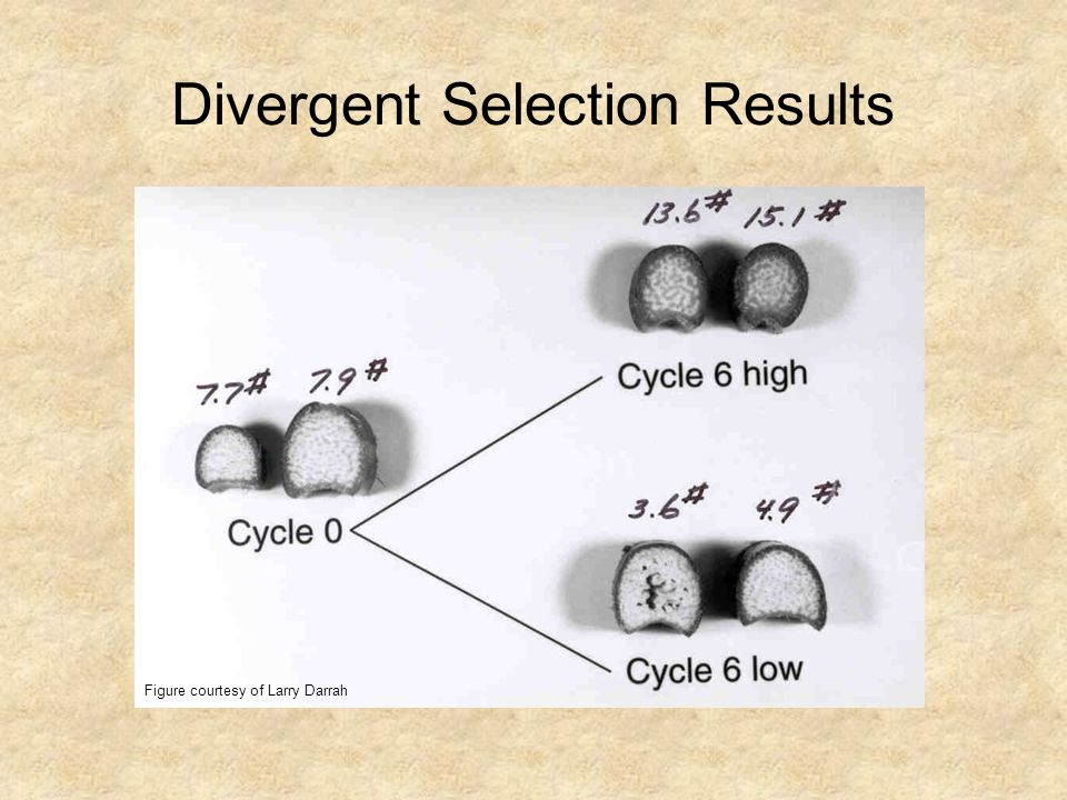 Divergent Selection Results