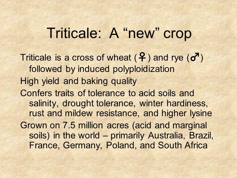 Triticale: A new crop