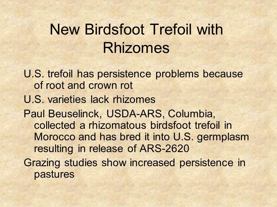New Birdsfoot Trefoil with Rhizomes