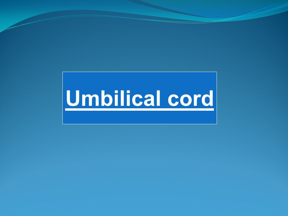 Umbilical cord
