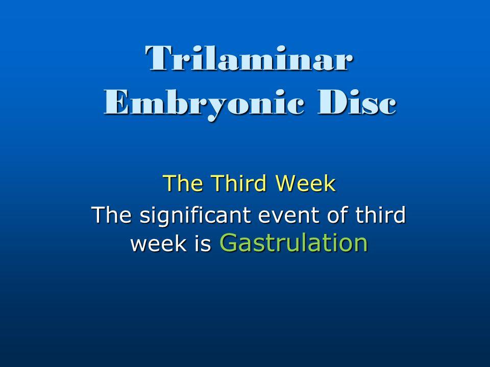 Trilaminar Embryonic Disc