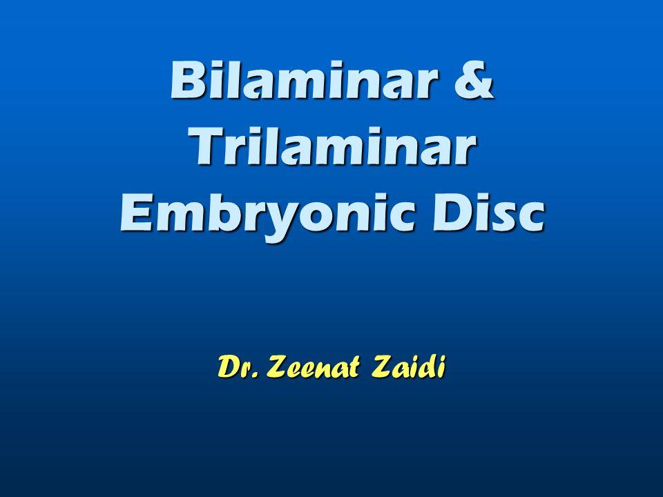 Bilaminar & Trilaminar Embryonic Disc