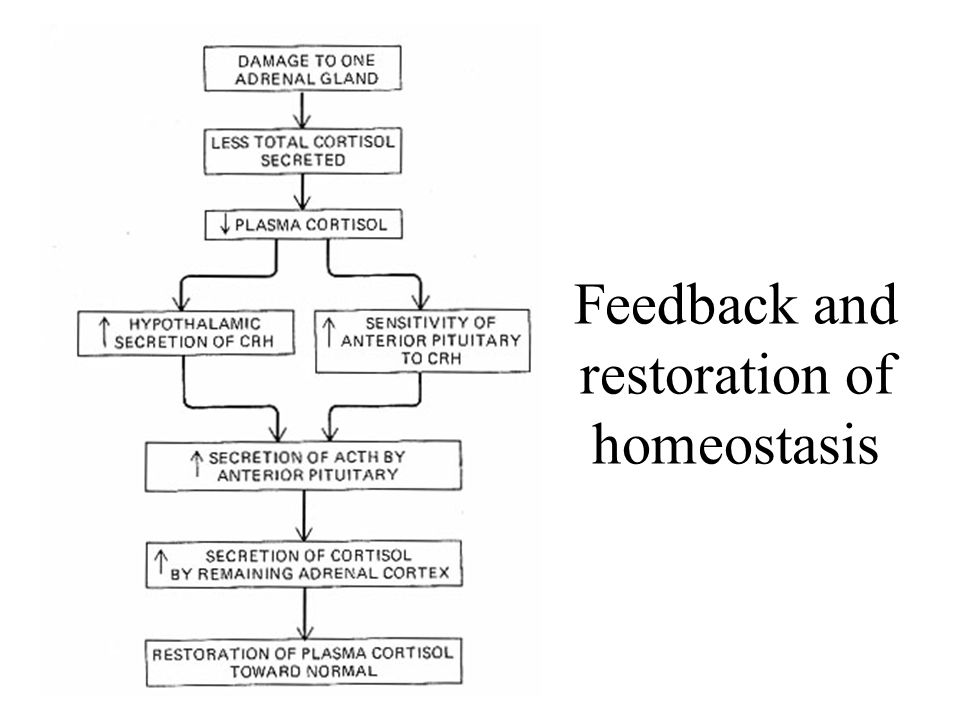 Feedback and restoration of homeostasis