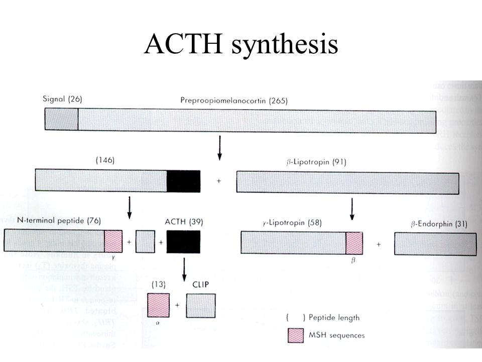 ACTH synthesis