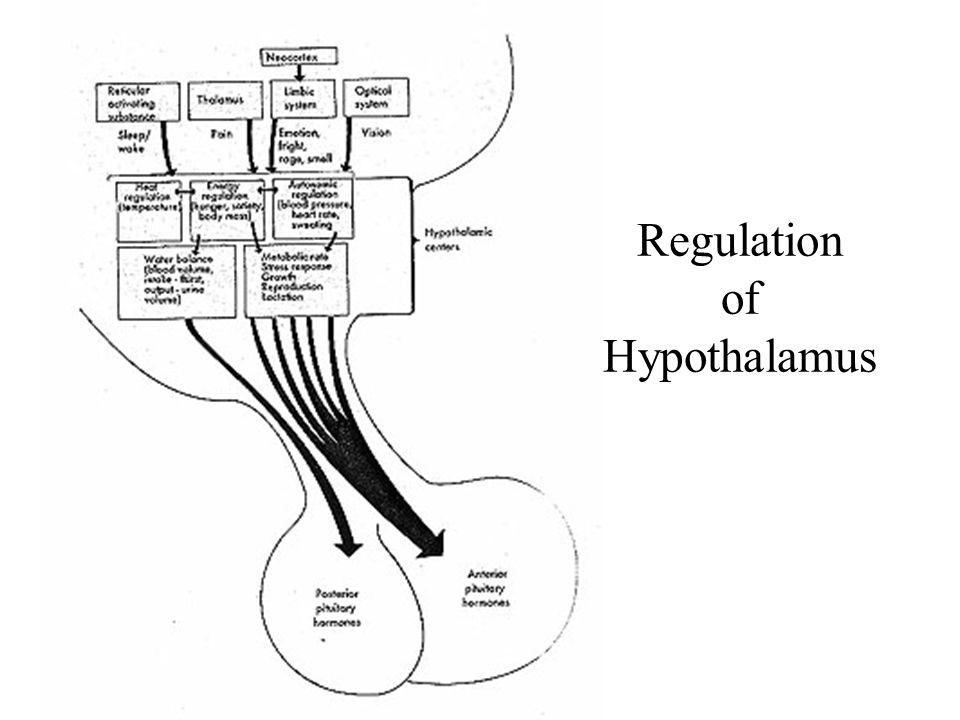 Regulation of Hypothalamus