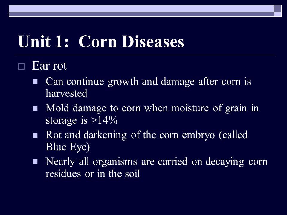 Unit 1: Corn Diseases Ear rot