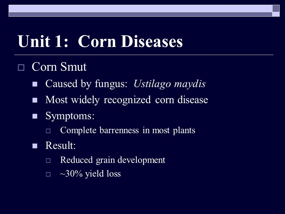Unit 1: Corn Diseases Corn Smut Caused by fungus: Ustilago maydis