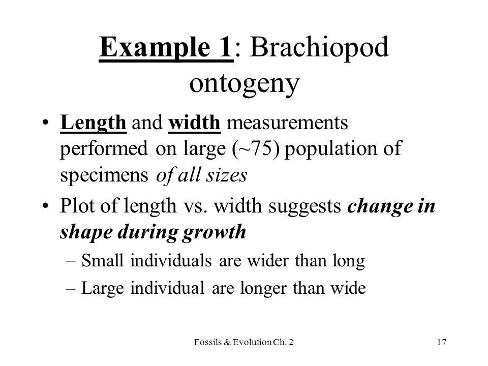 Example 1: Brachiopod ontogeny