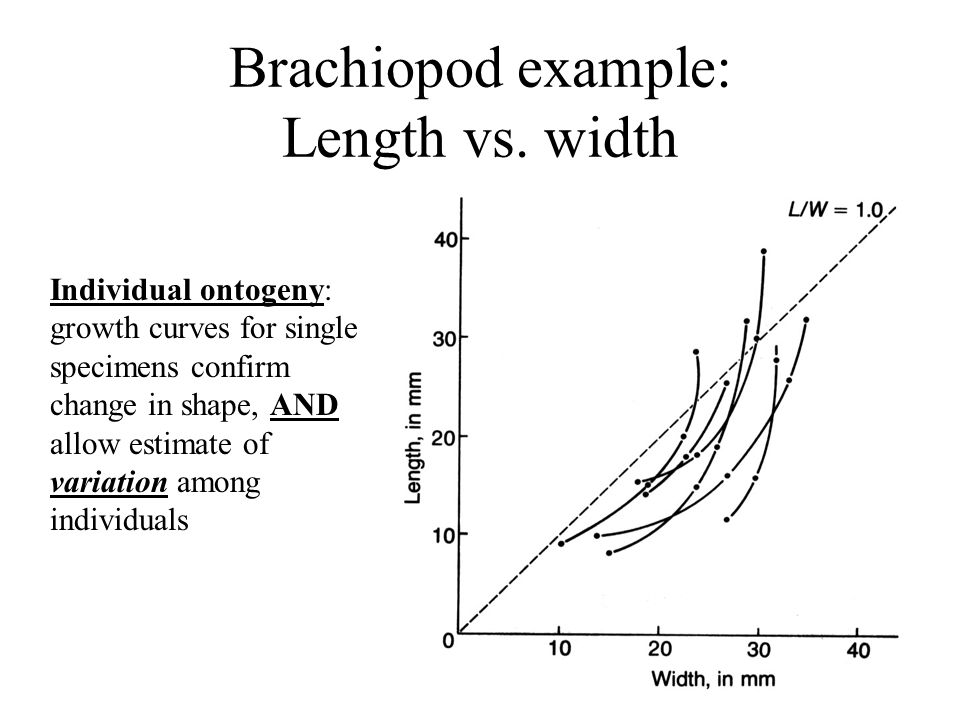 Brachiopod example: Length vs. width