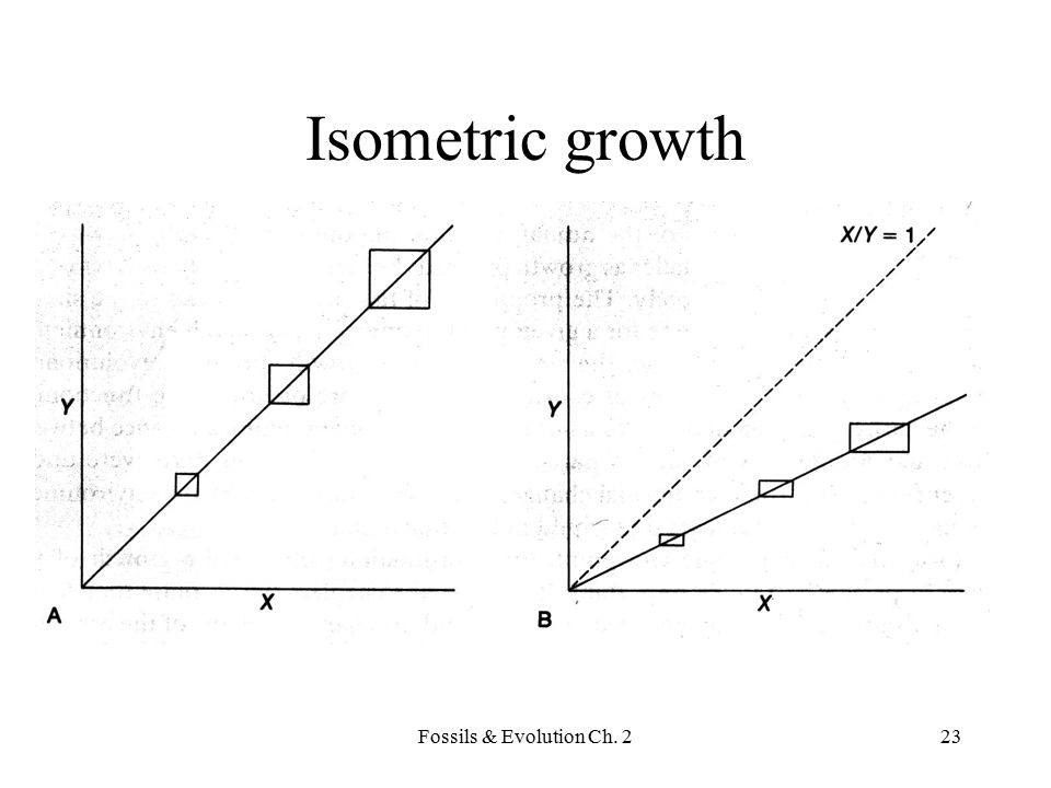 Isometric growth Fossils & Evolution Ch. 2