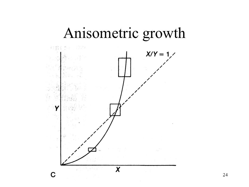 Anisometric growth Fossils & Evolution Ch. 2