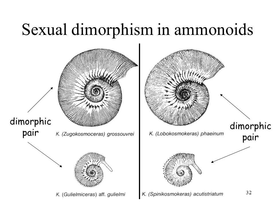 Sexual dimorphism in ammonoids