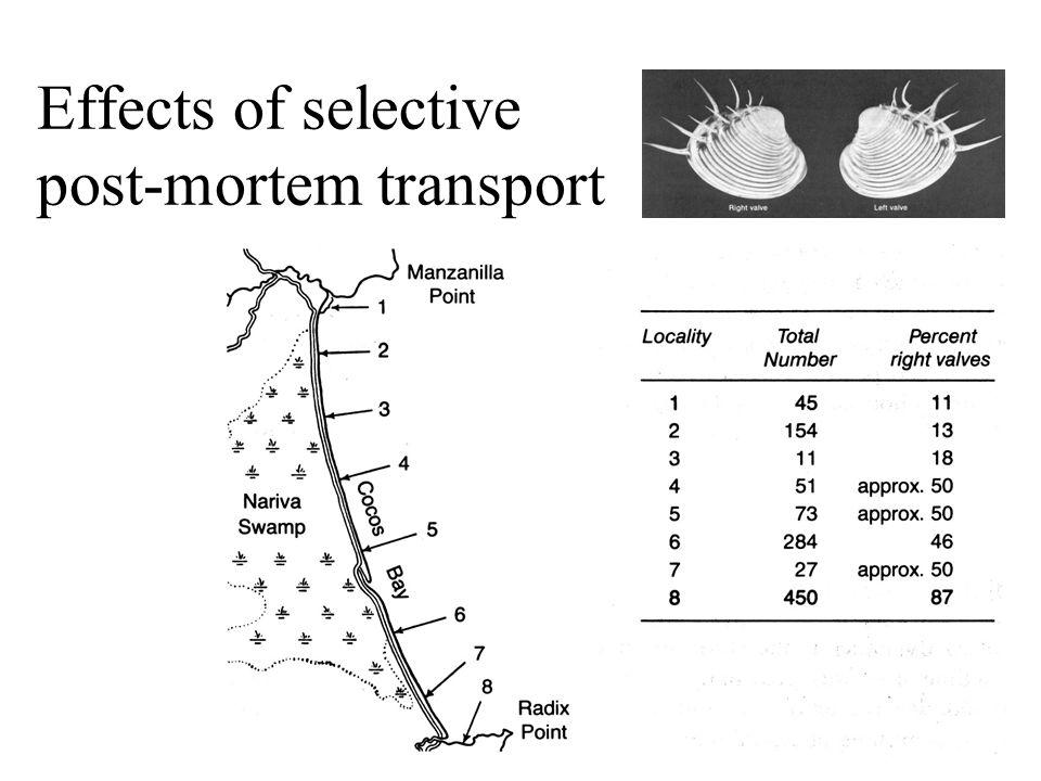 Effects of selective post-mortem transport