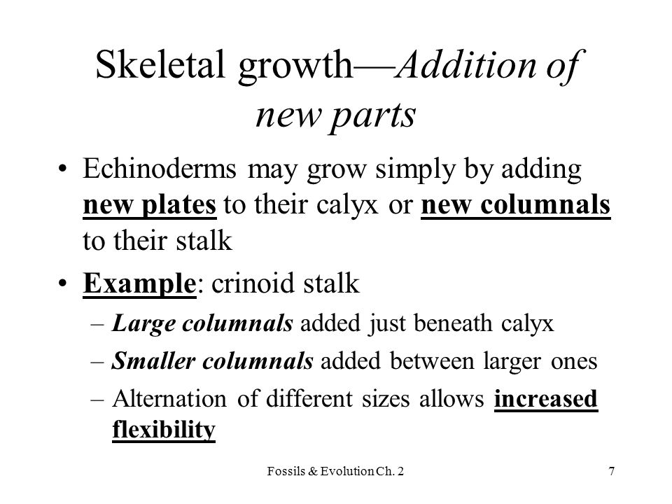 Skeletal growth—Addition of new parts