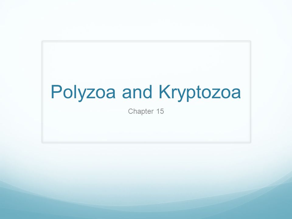 Polyzoa and Kryptozoa Chapter 15