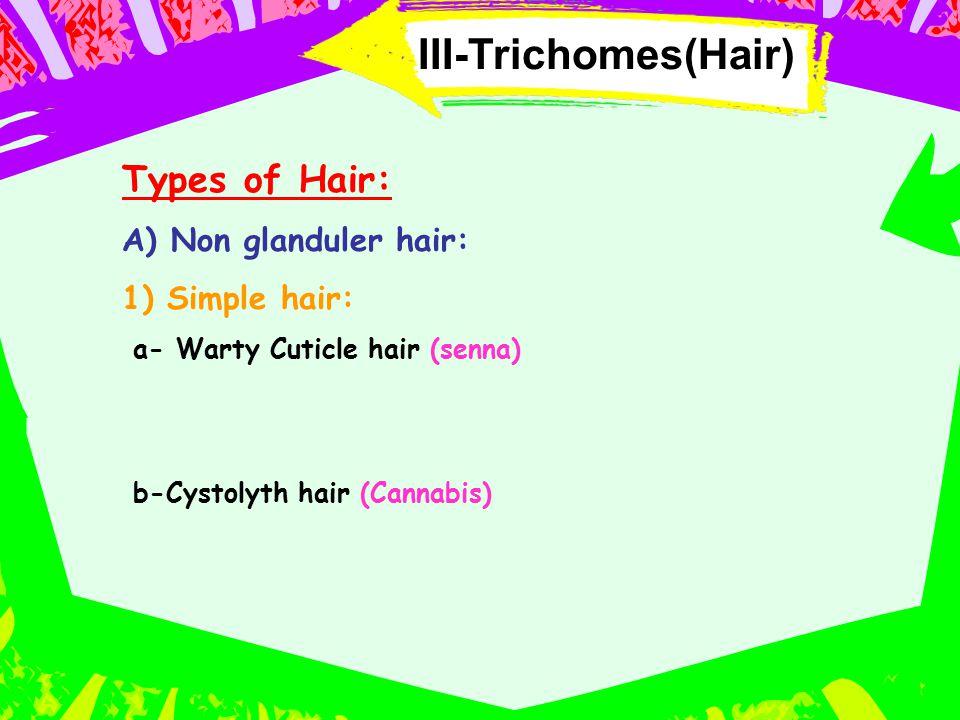 III-Trichomes(Hair) Types of Hair: A) Non glanduler hair: