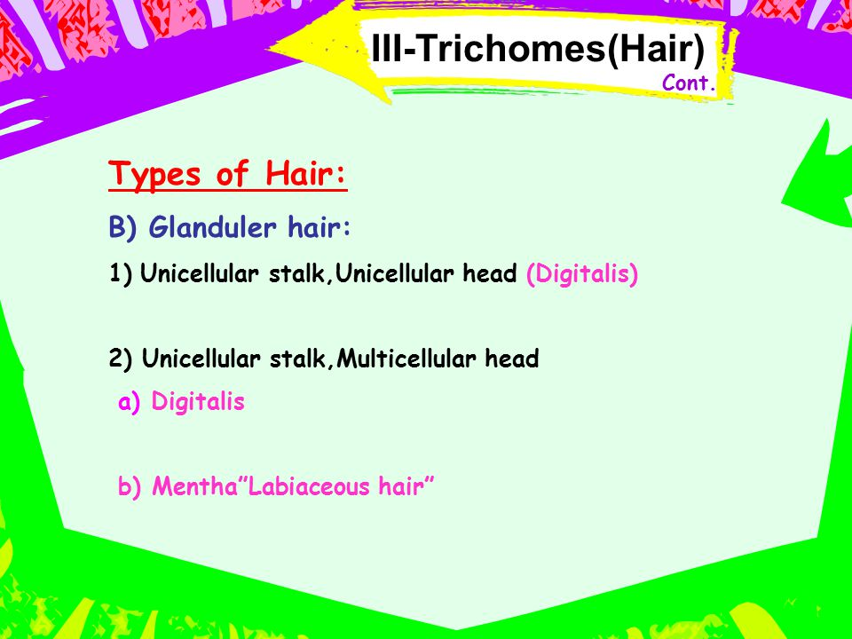 III-Trichomes(Hair) Types of Hair: B) Glanduler hair: