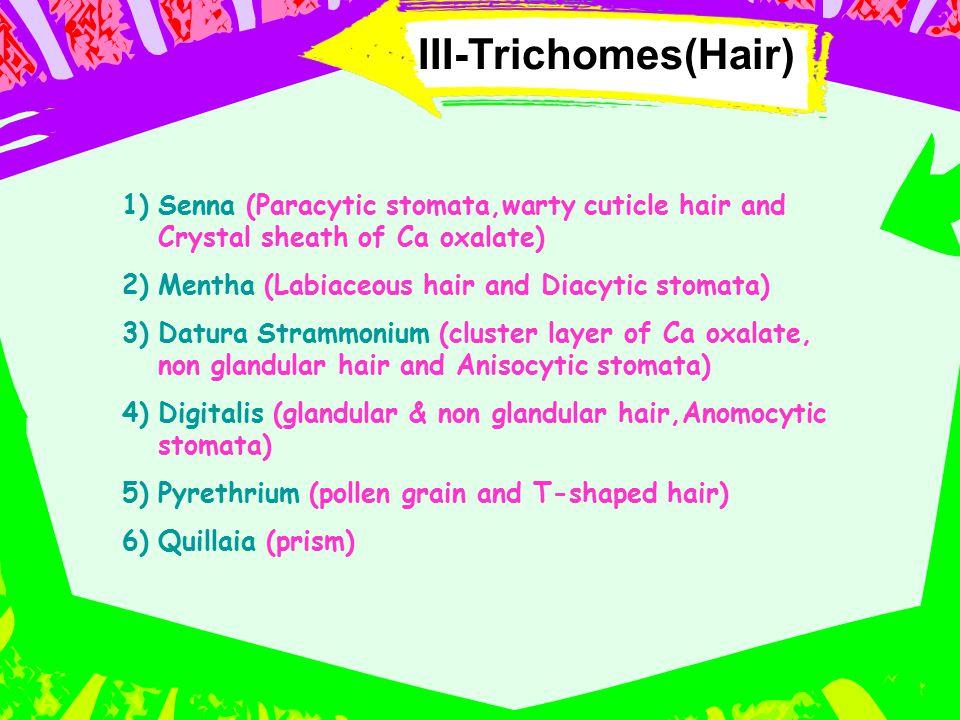 III-Trichomes(Hair) Senna (Paracytic stomata,warty cuticle hair and Crystal sheath of Ca oxalate) Mentha (Labiaceous hair and Diacytic stomata)
