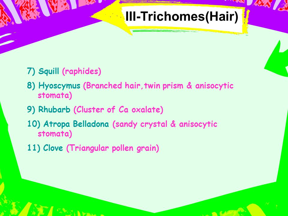 III-Trichomes(Hair) 7) Squill (raphides)