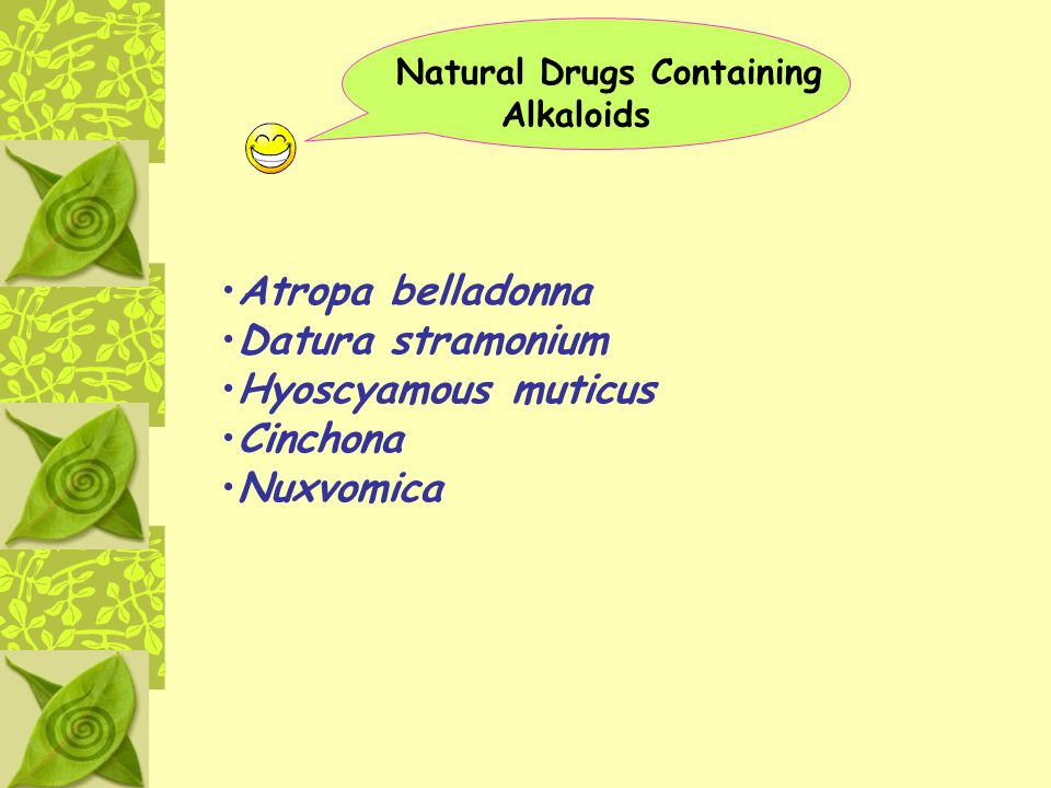 Atropa belladonna Datura stramonium Hyoscyamous muticus Cinchona