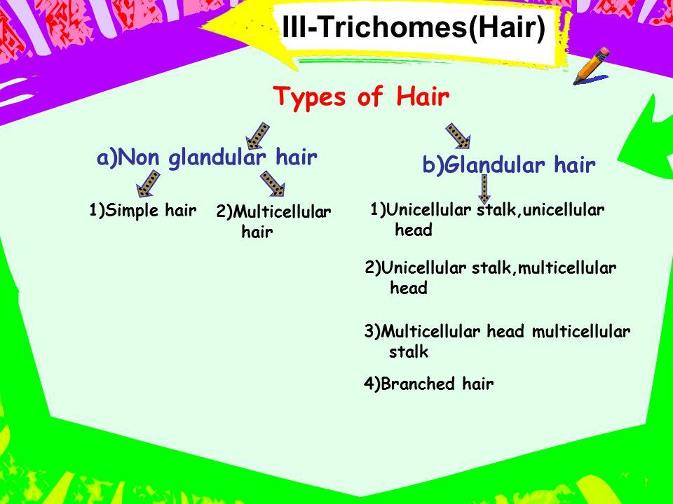 III-Trichomes(Hair) Types of Hair a)Non glandular hair