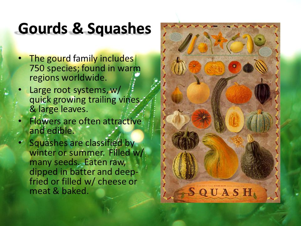 Gourds & Squashes The gourd family includes 750 species; found in warm regions worldwide.