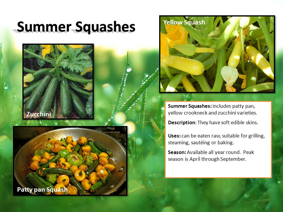 Summer Squashes Yellow Squash Zucchini Patty pan Squash