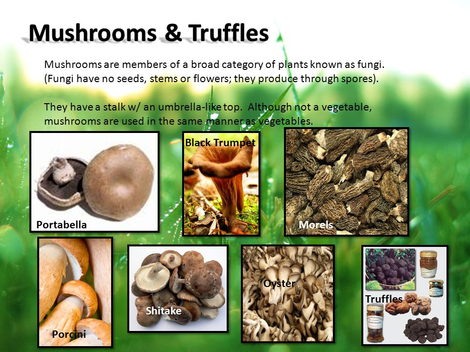 Mushrooms & Truffles