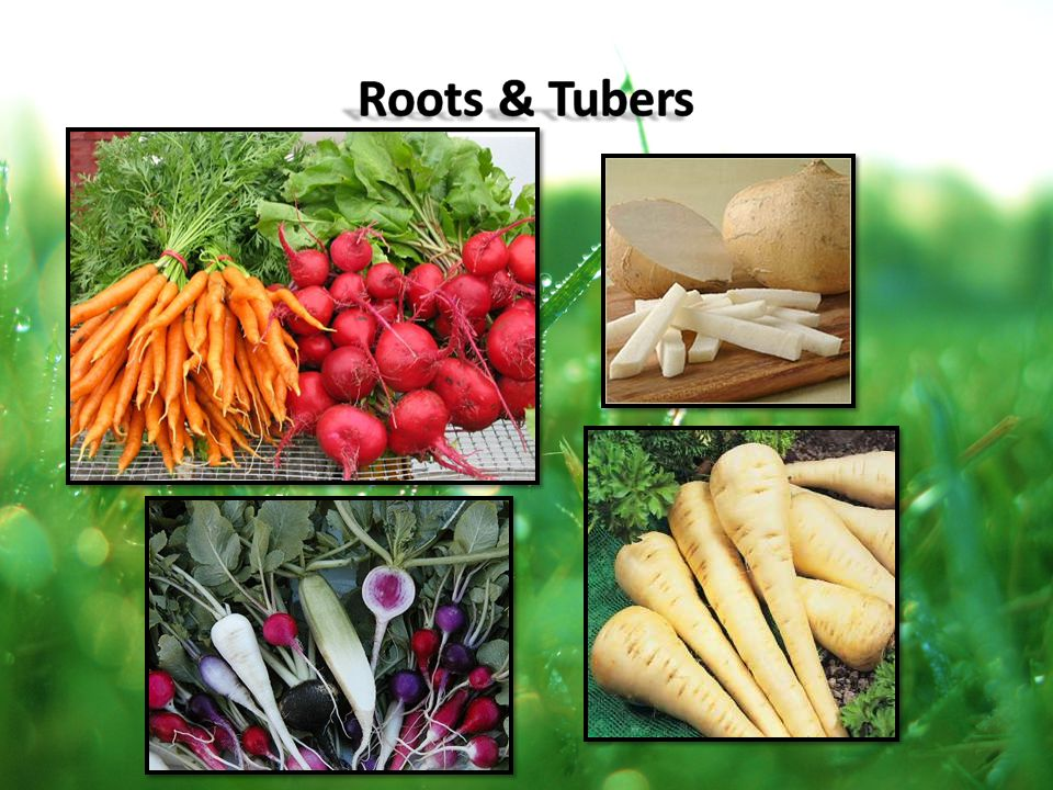 Roots & Tubers