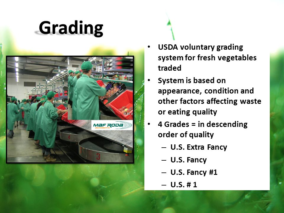 Grading USDA voluntary grading system for fresh vegetables traded