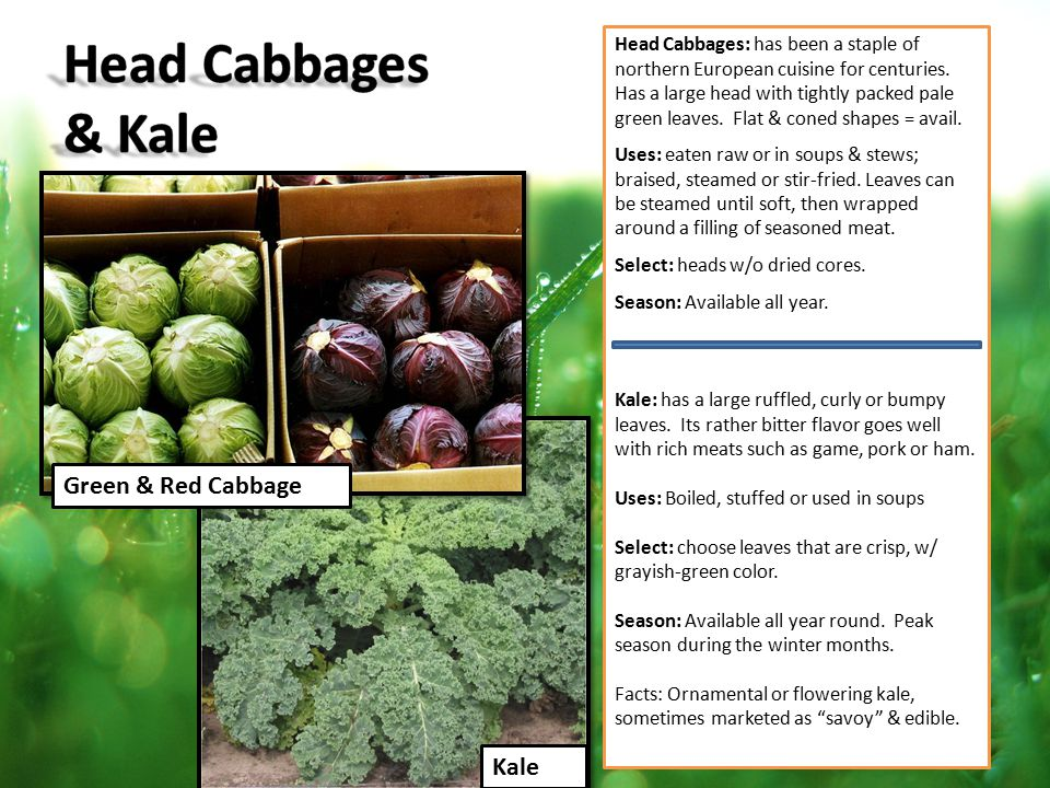 Head Cabbages & Kale Green & Red Cabbage Kale