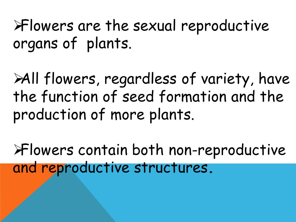 Flowers are the sexual reproductive organs of plants.
