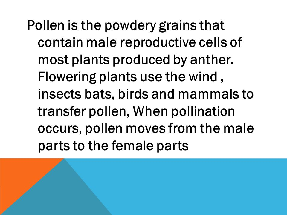 Pollen is the powdery grains that contain male reproductive cells of most plants produced by anther.