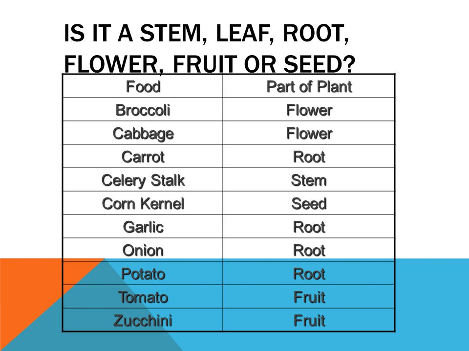 Is It a Stem, Leaf, Root, Flower, Fruit or Seed