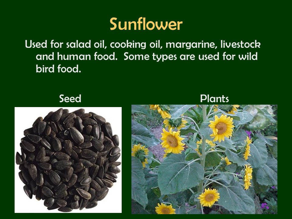 Sunflower Used for salad oil, cooking oil, margarine, livestock and human food. Some types are used for wild bird food.